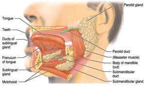 saliva-gland-copy1